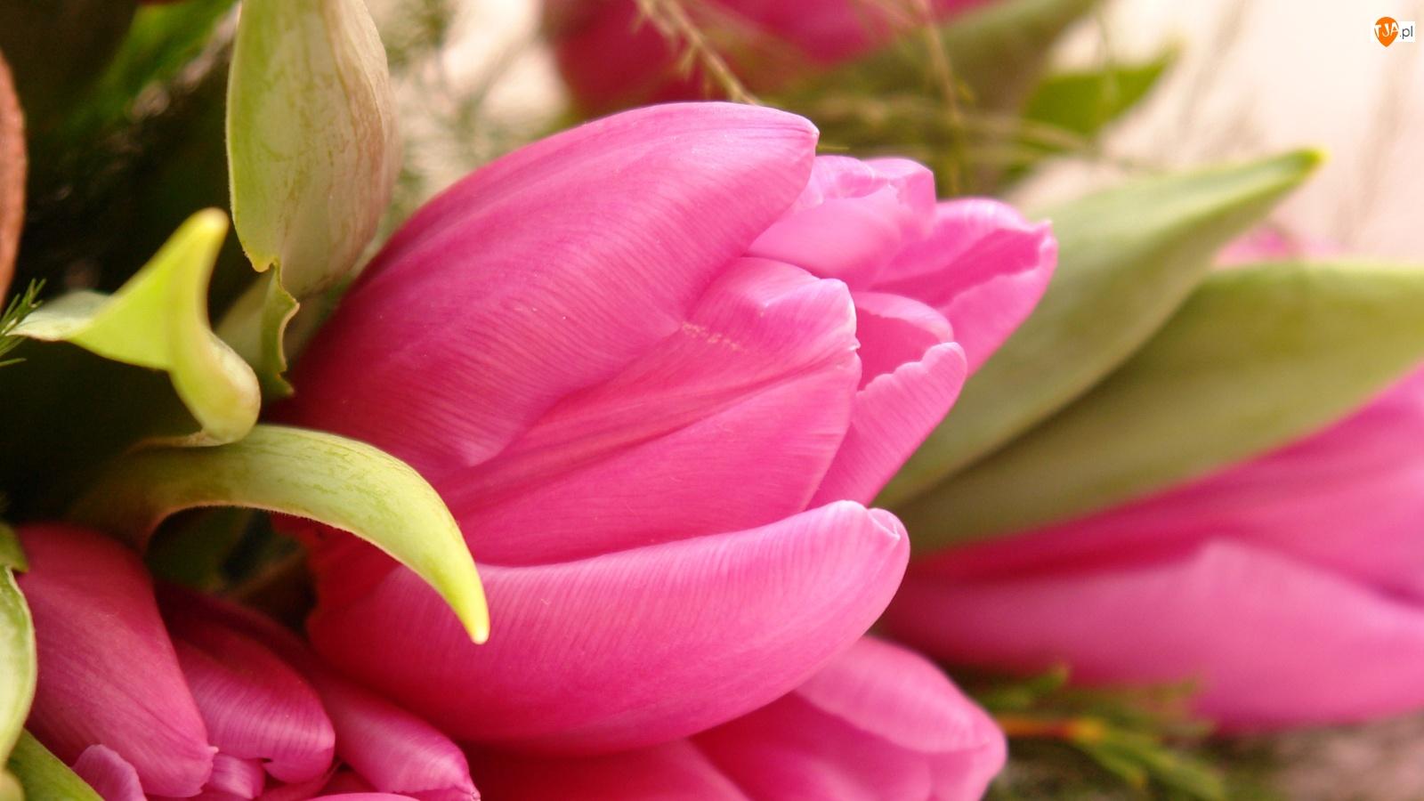 Różowe, Listki, Tulipany, Zielone