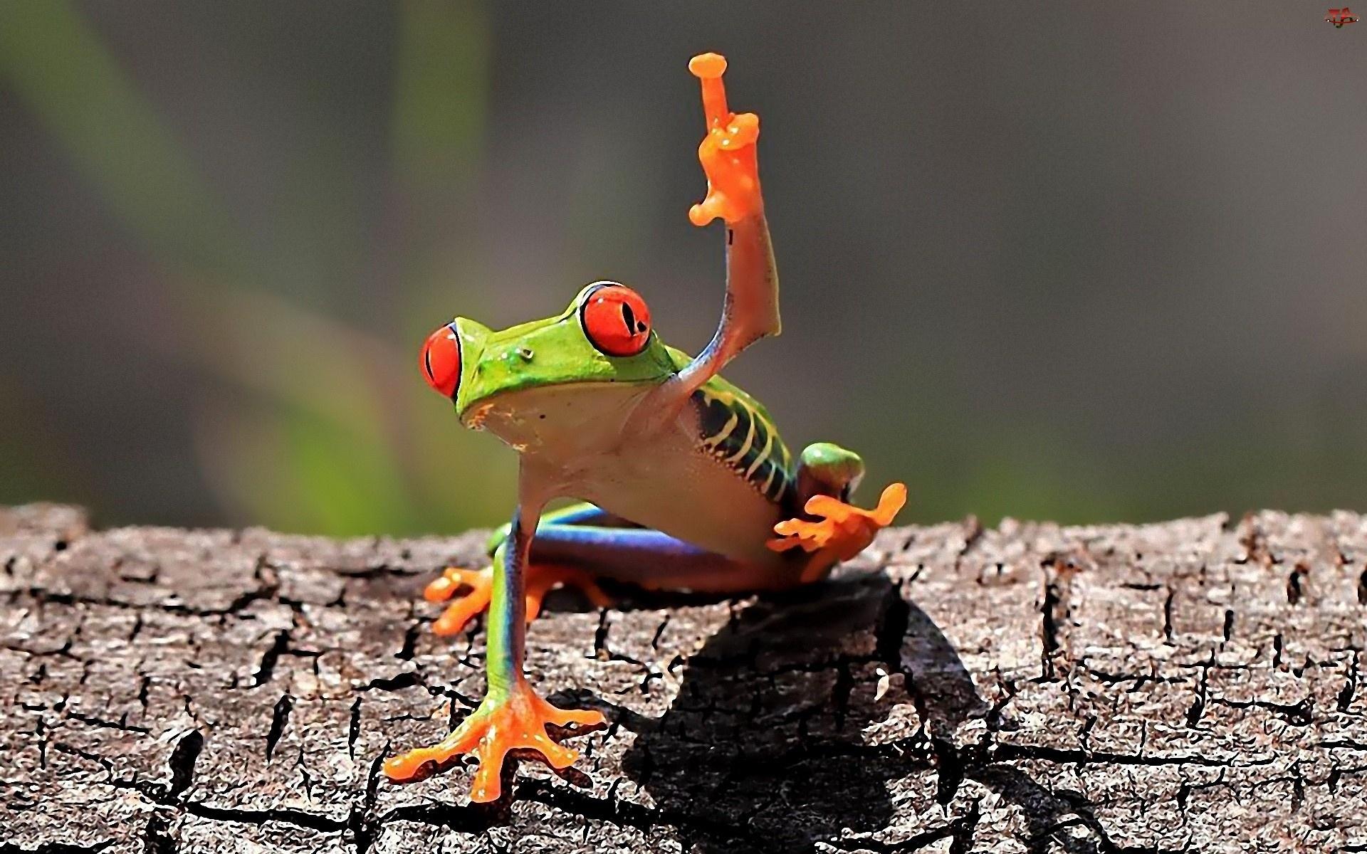 Kolorowa, Żaba