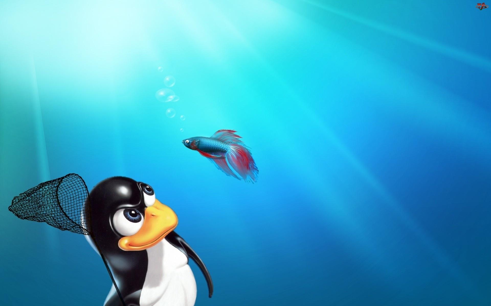 Pingwin, Linux, Ryba, Bojownik