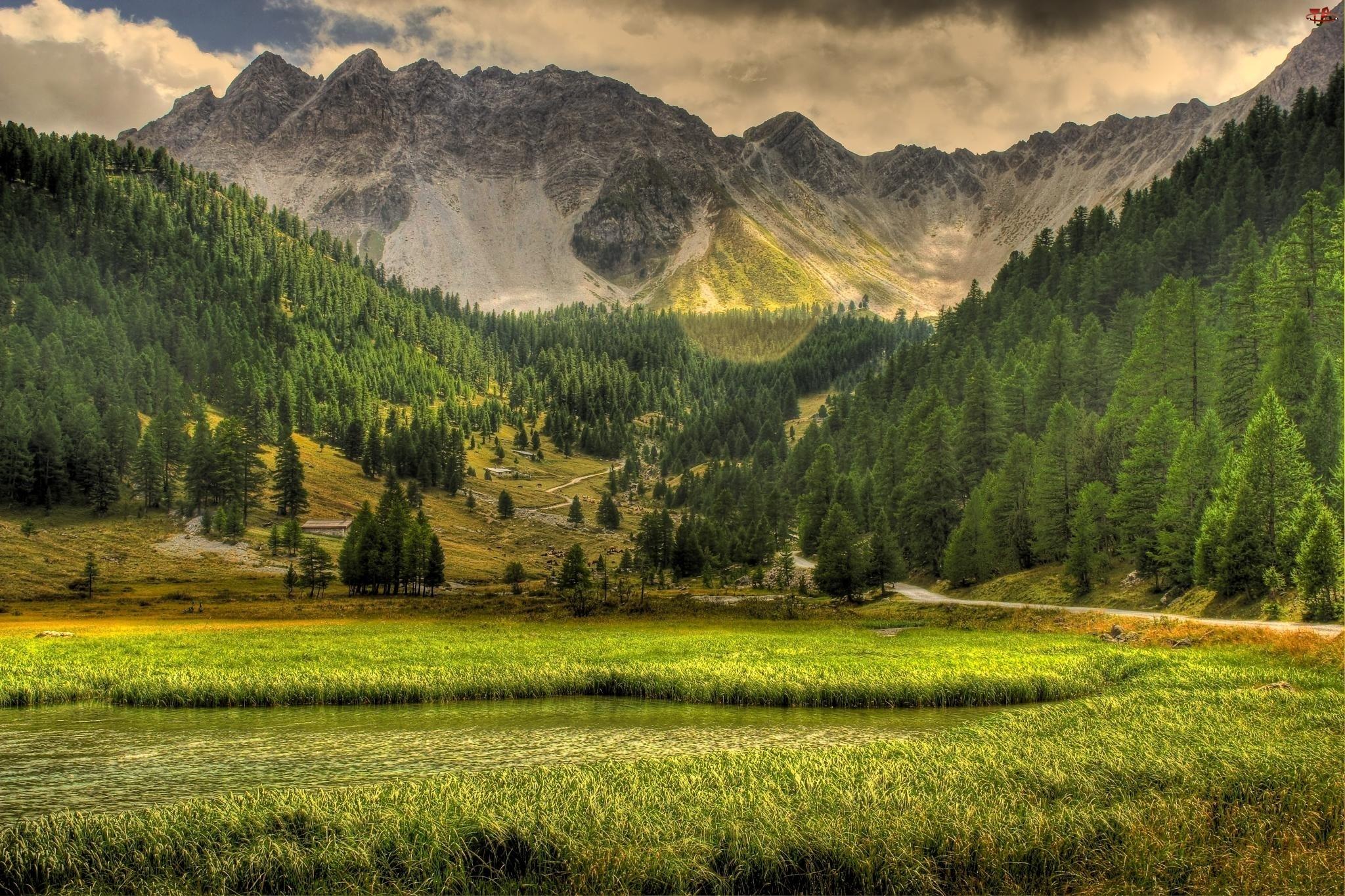 Las, Trawa, Góry