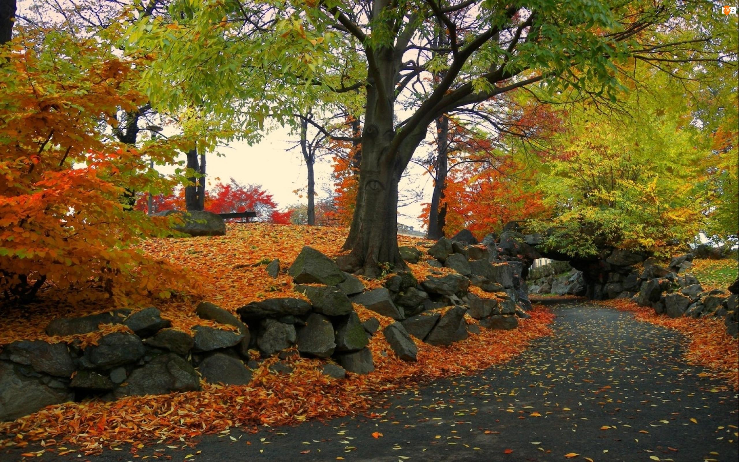 Jesień, Drzewa, Droga, Kamienie