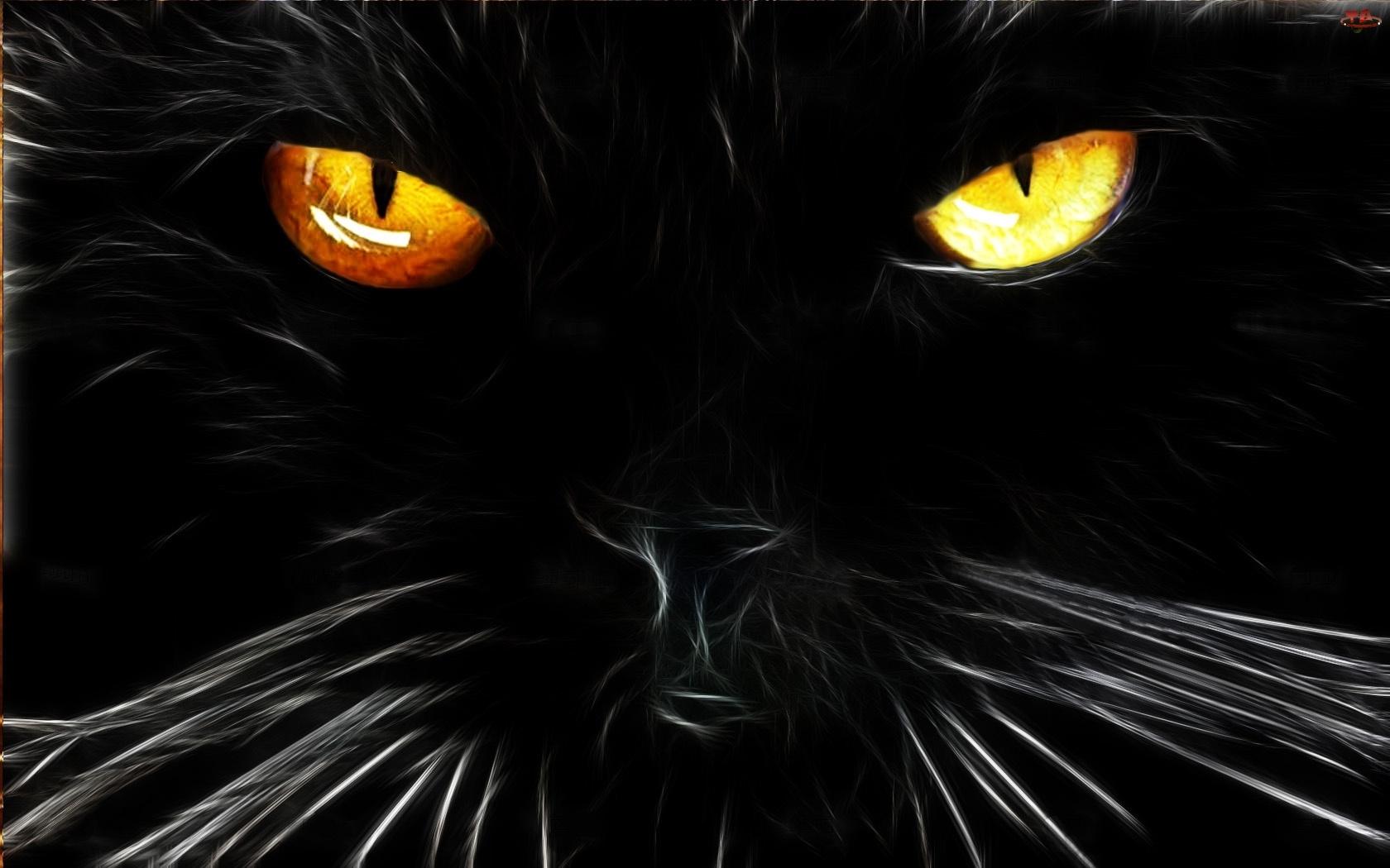 Czarny, Fraktal, Kot, Oczy