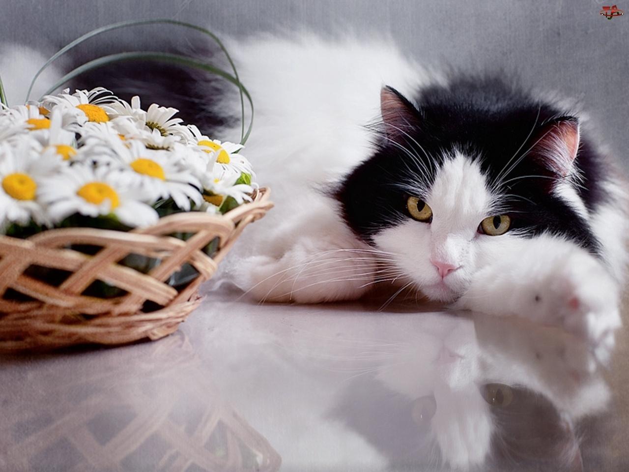 Romantyczny, Koszyk, Kotek, Kwiaty