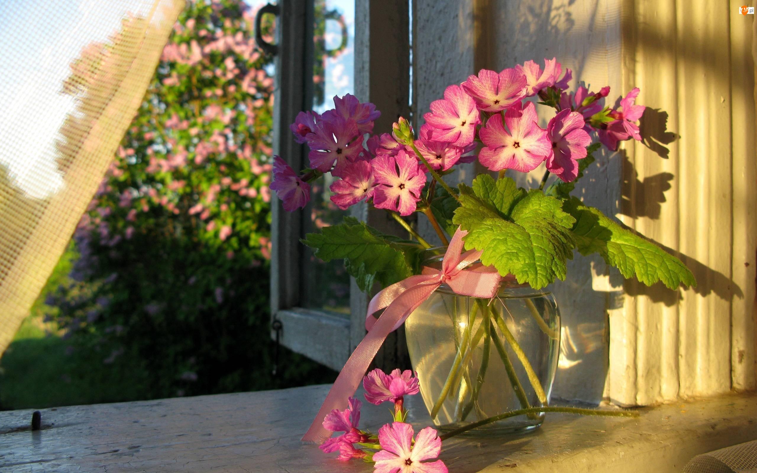 Kwiatów, Okno, Bukiet, Wazon, Różowych