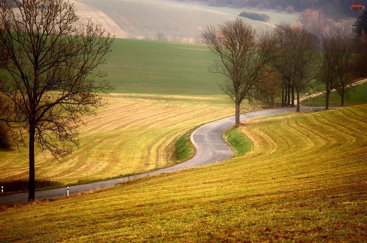 Góry, Drzewa, Droga, Pole