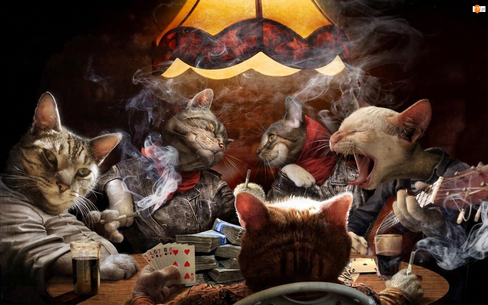 Poker, Koty, Karty