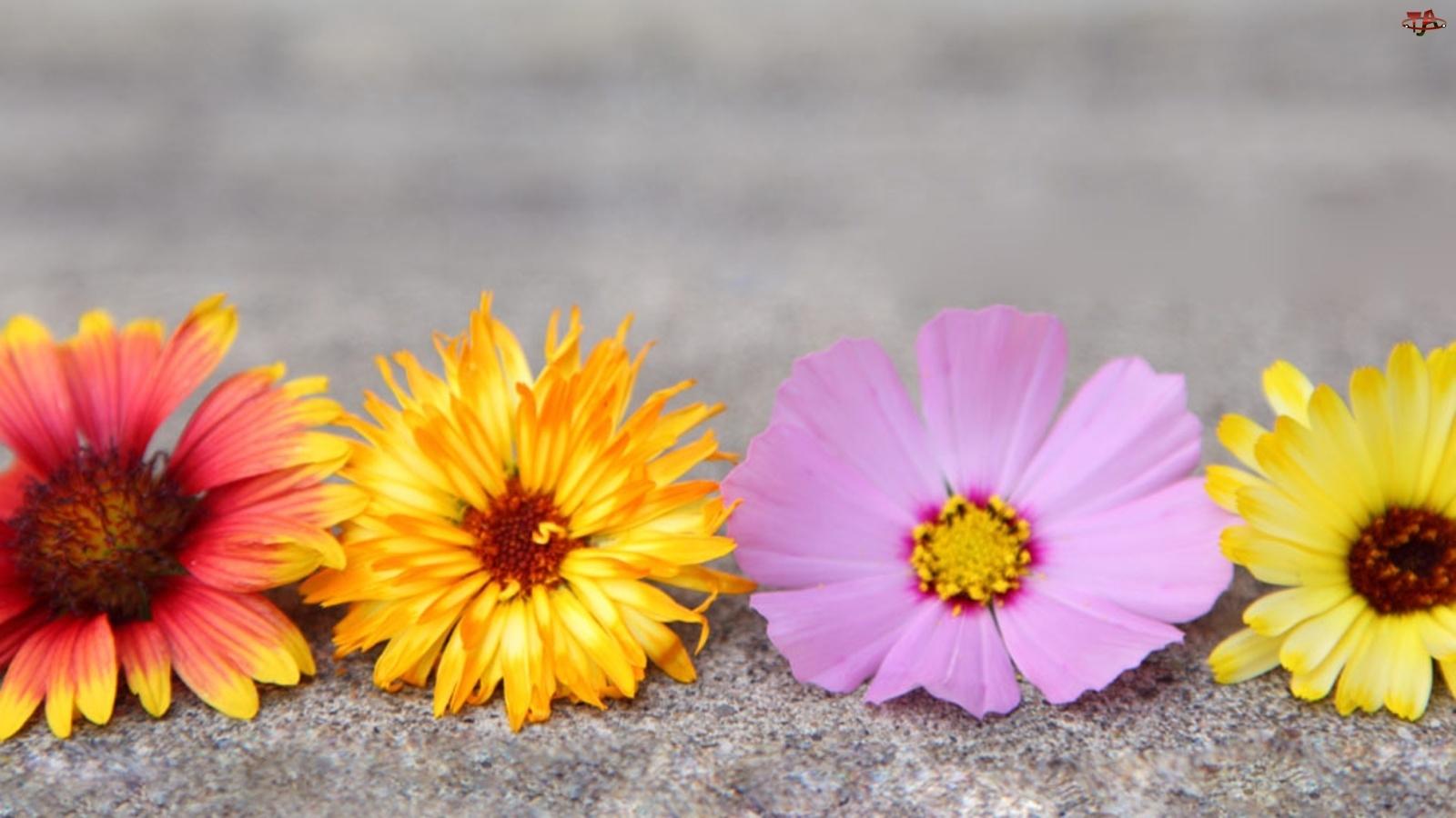 Kolorowe, Kwiaty