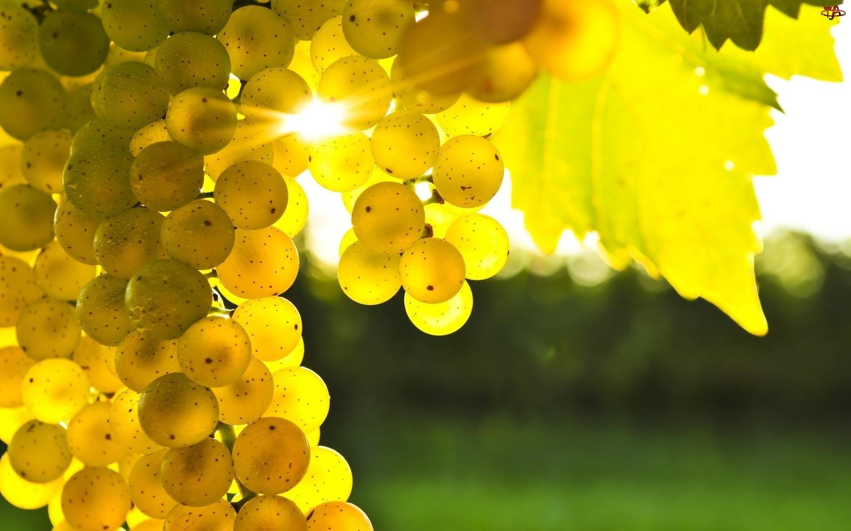 Winogrona, Słońce