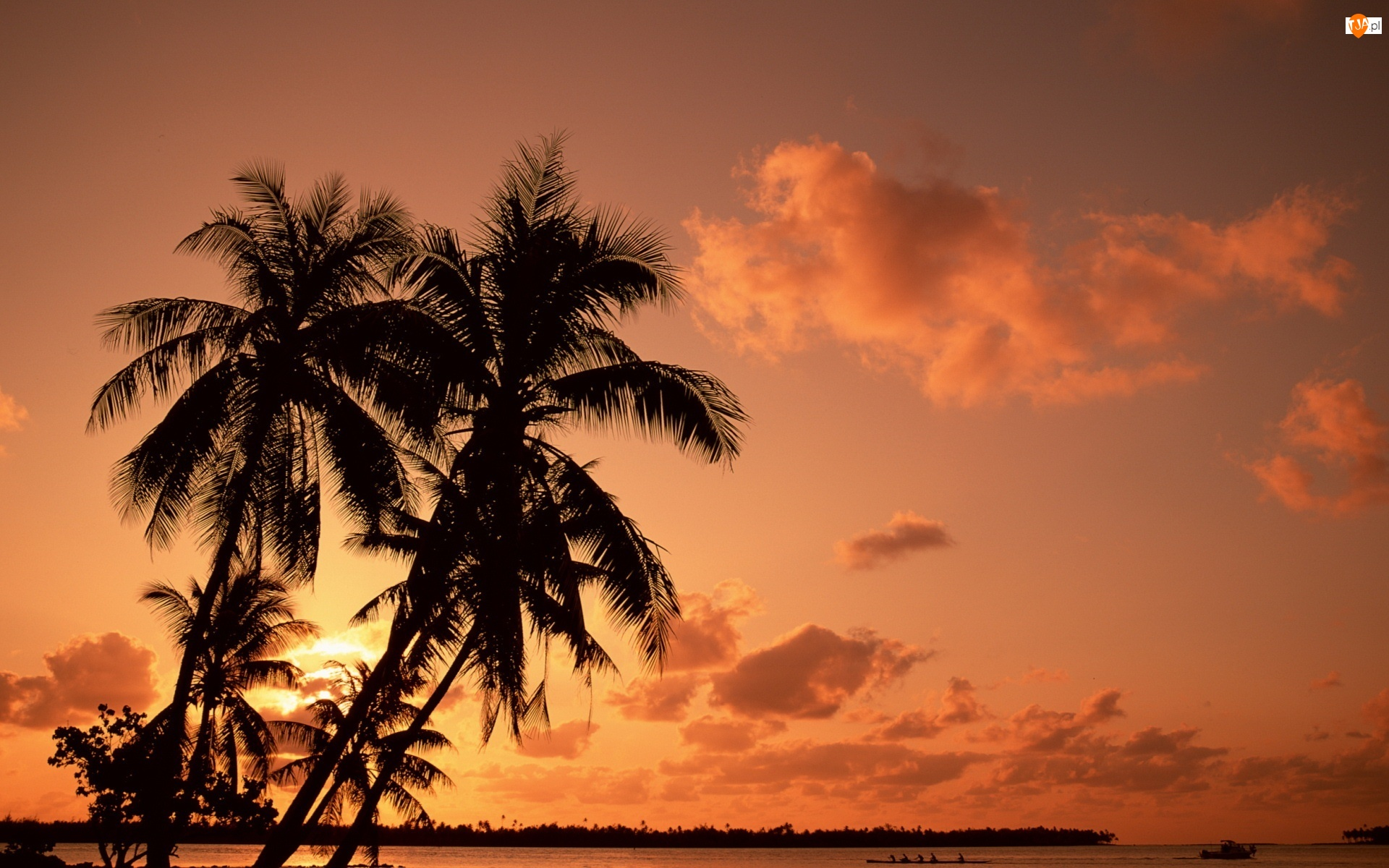 Palmy, Zatoka, Zachód, Słońca
