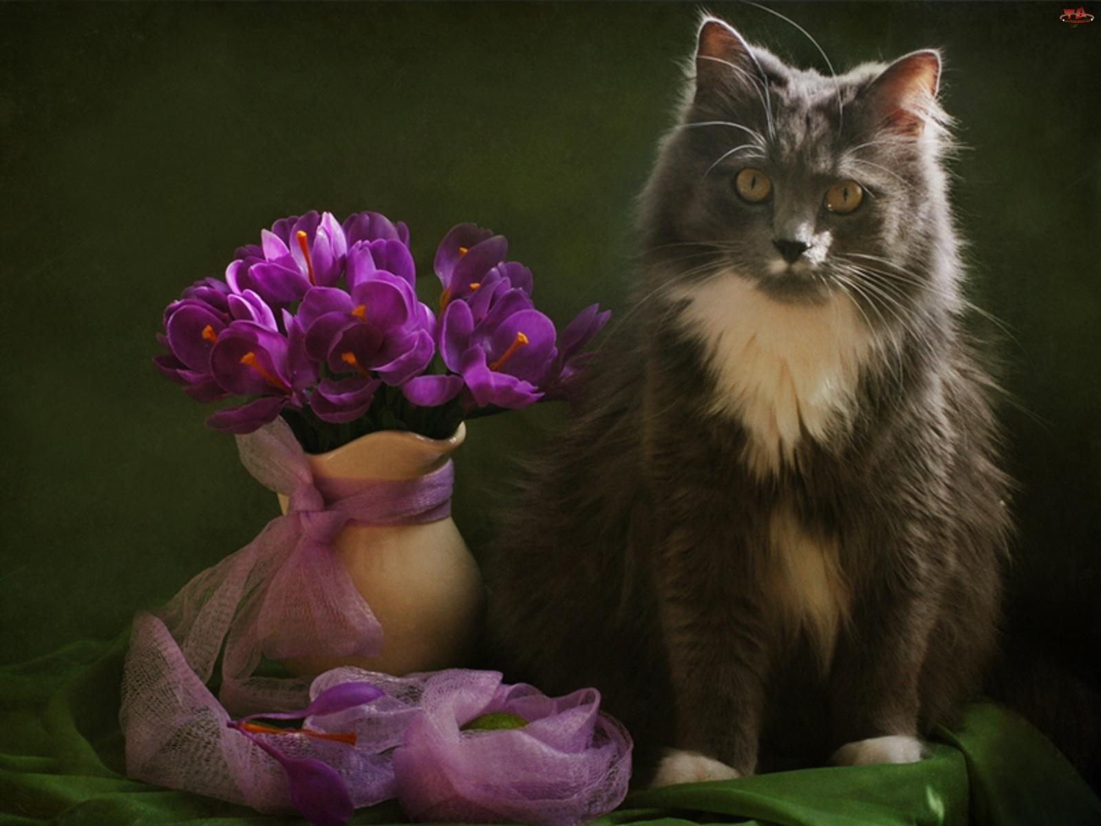 Wazon, Kot, Fioletowych, Bukiecik, Kwiatów