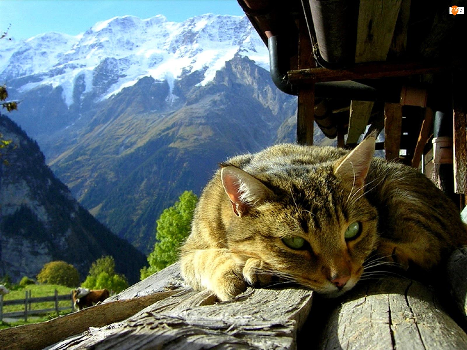 Kot, Góry, Dom, Stary, Leżący