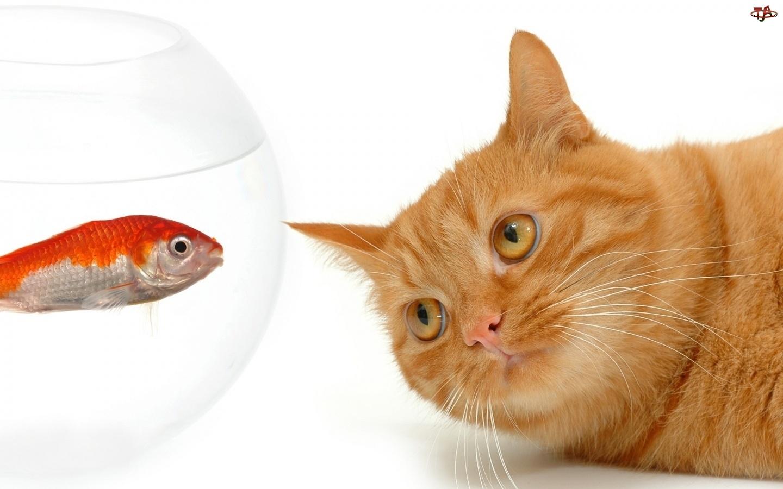 Akwarium, Kot, Ryba