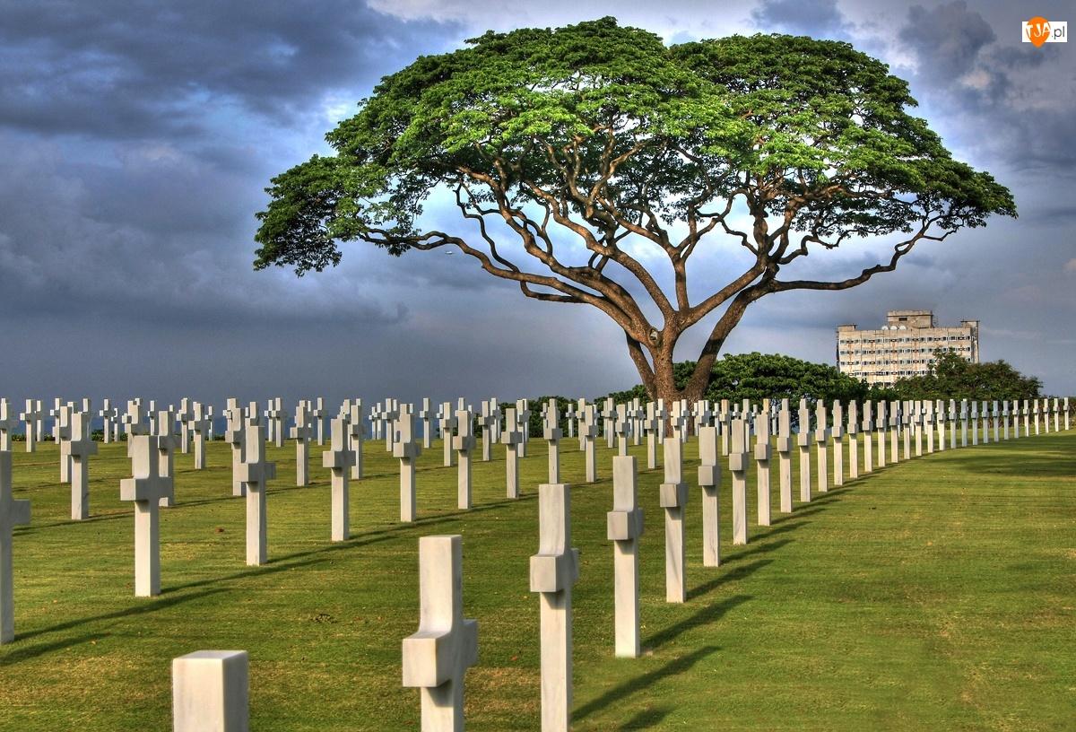 Krzyże, Cmentarz, Drzewo