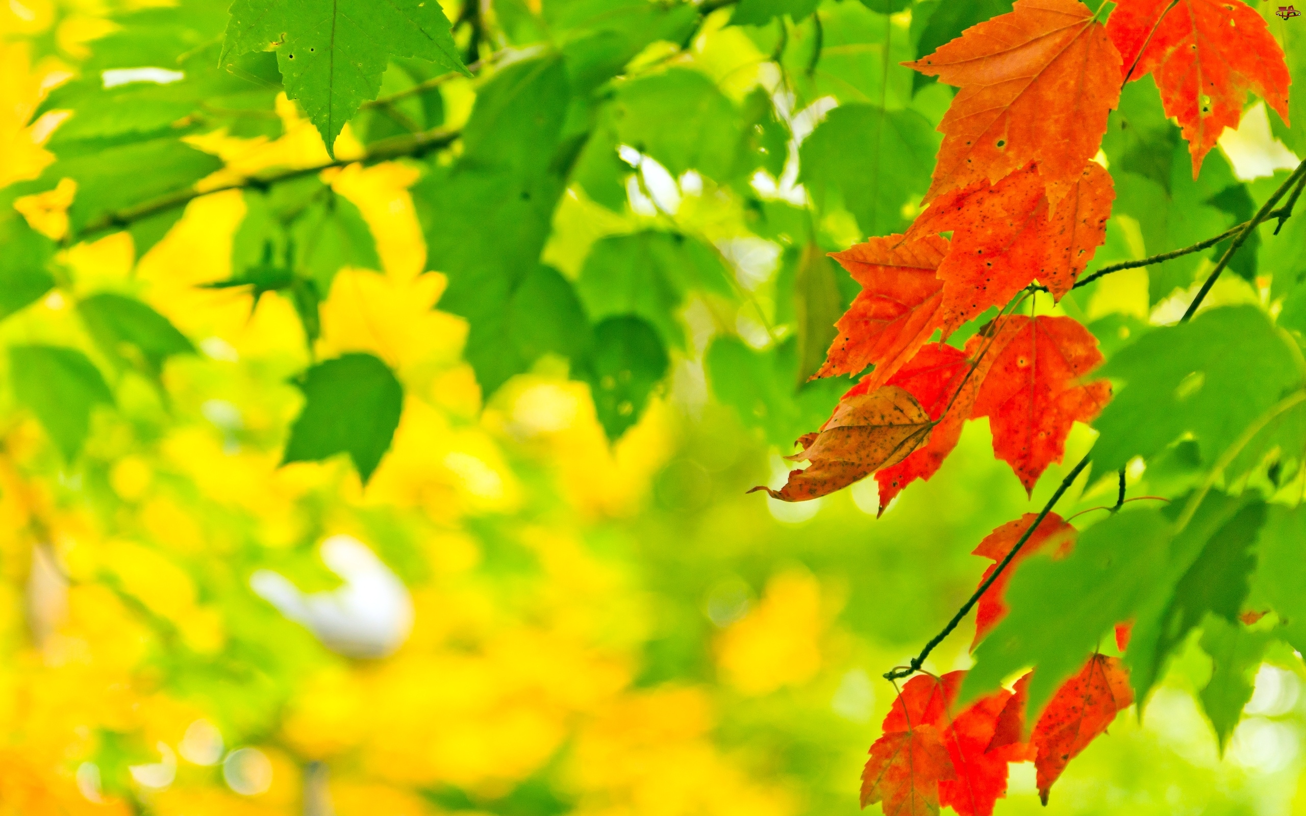 Zieleń, Drzewo, Liście