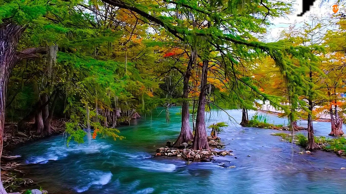 Drzewa, Las, Woda