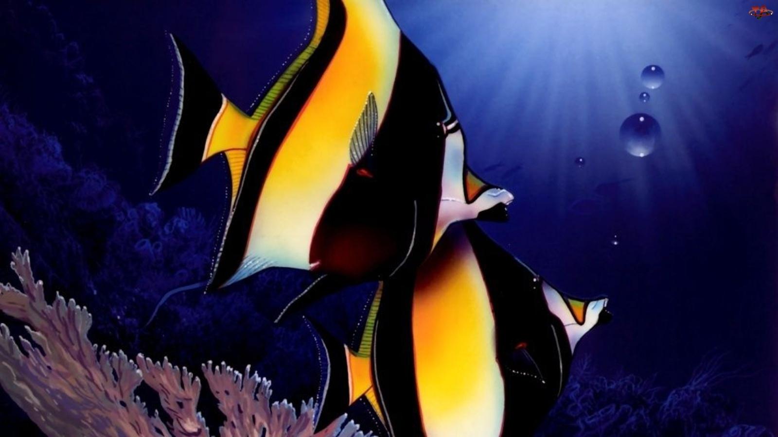 Ryby, Egzotyczne, Kolorowe