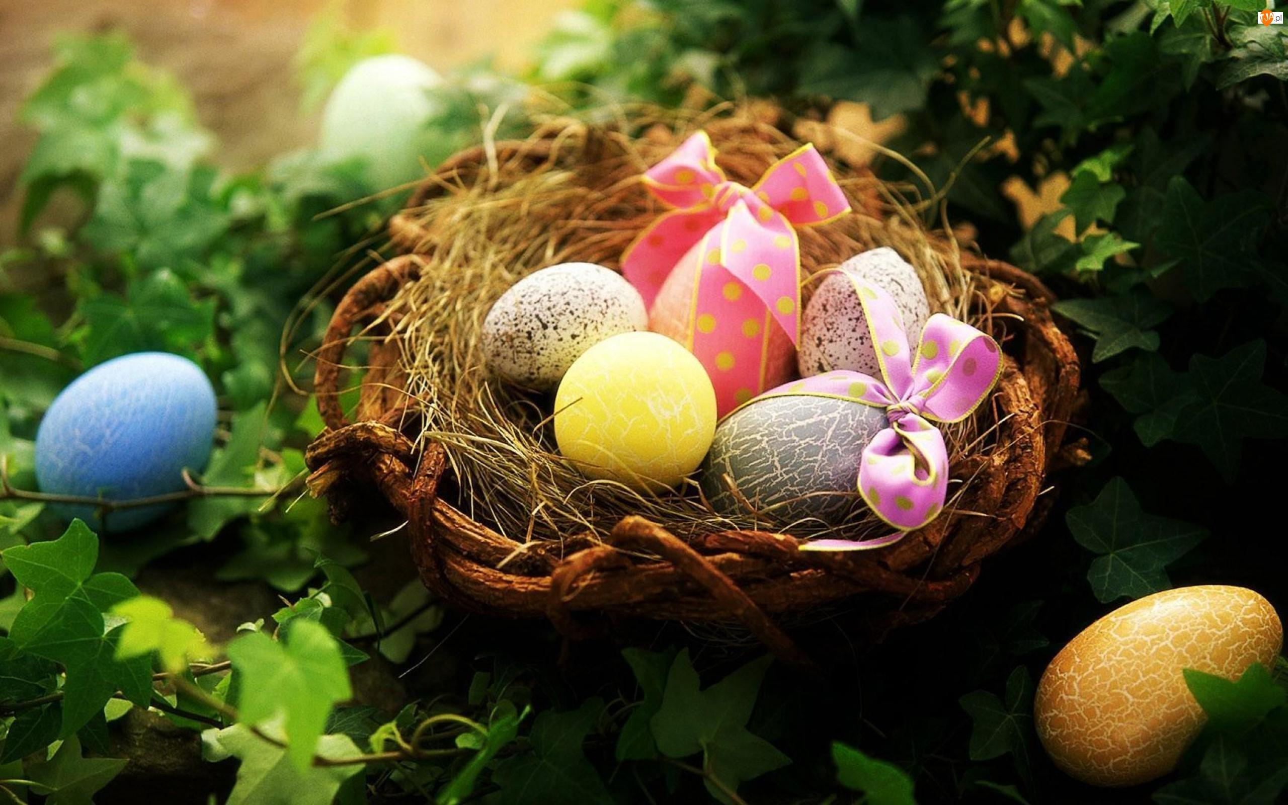 Gniazdko, Rośliny, Wielkanocne, Jajka