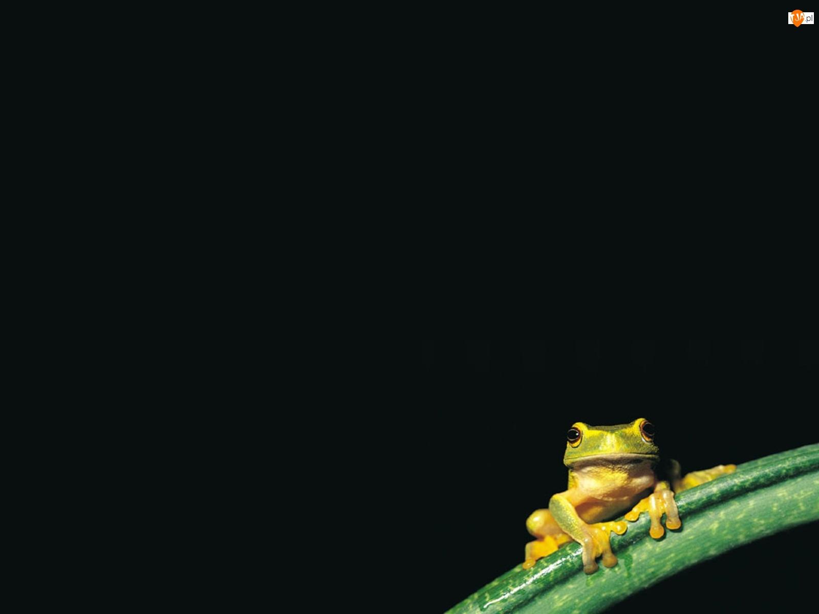 Noc, Żabka, Gałązka, Zielona