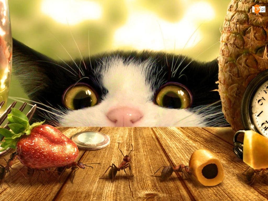 Przerażony, Kot