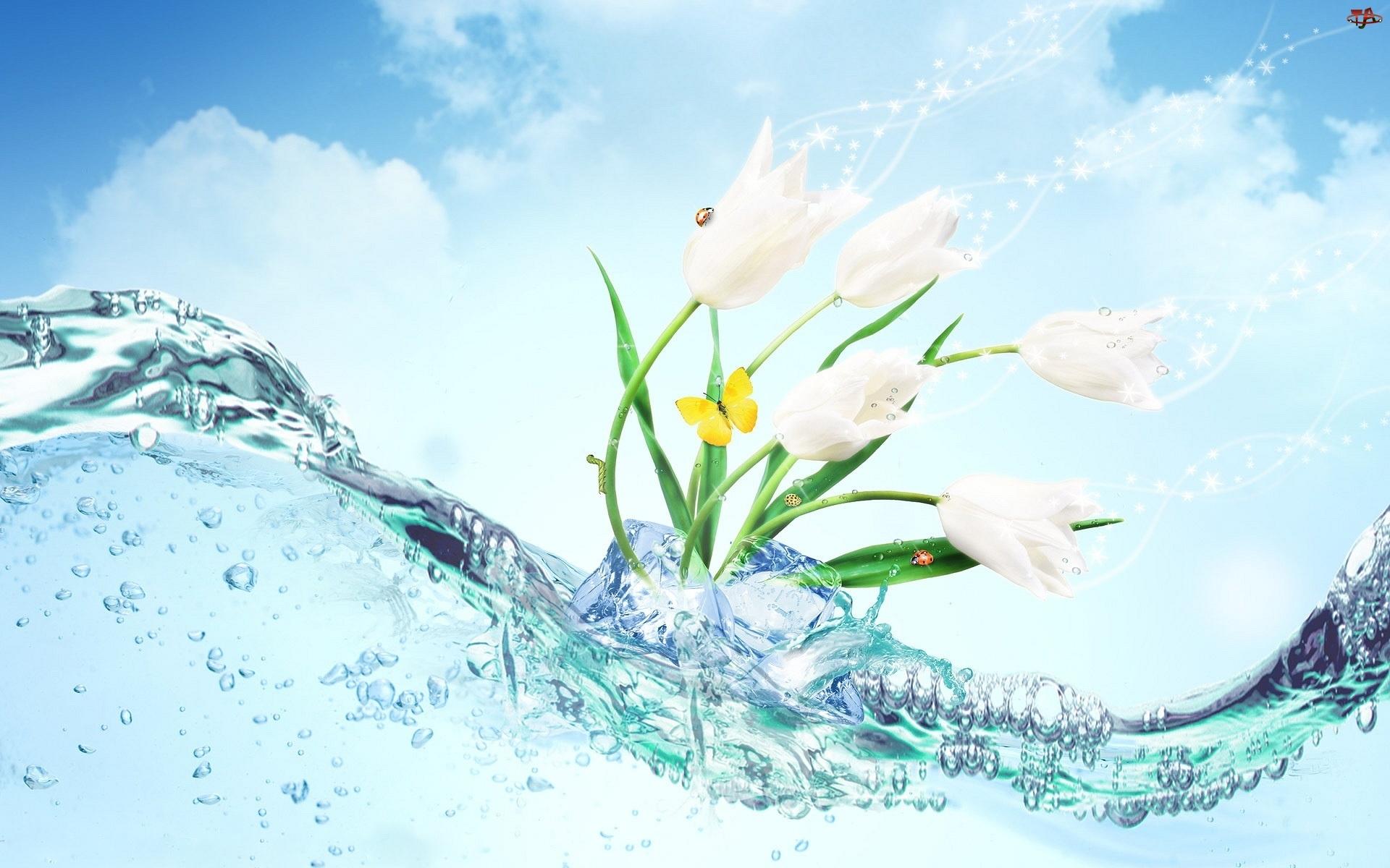 Motyl, Kwiaty, Woda