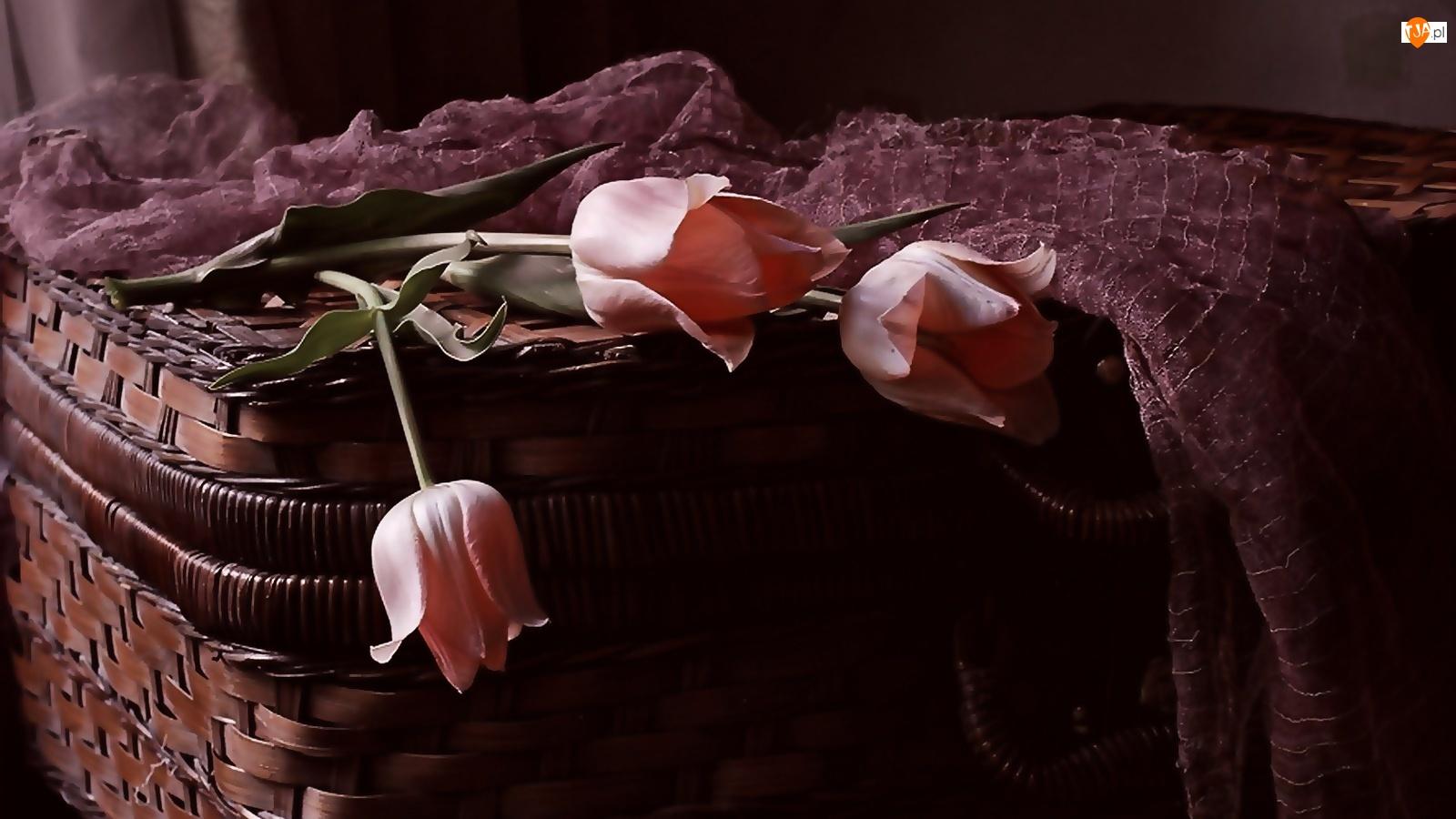 Szal, Kosz, Tulipany