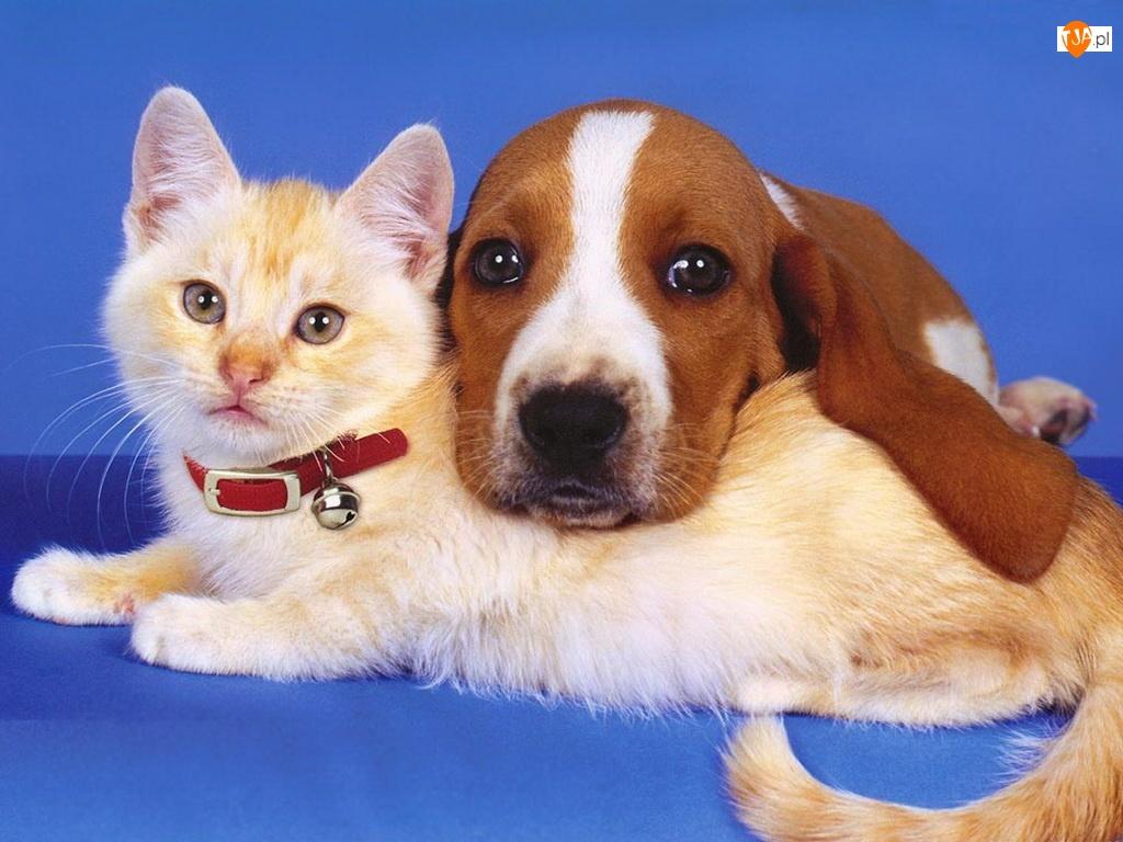 Kumple, Kot, Pies