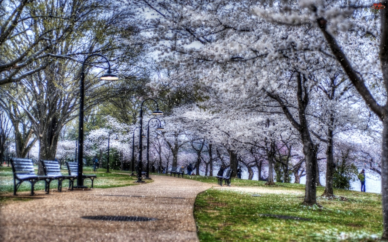 Park, Ławki, Kwitnące, Drzewa