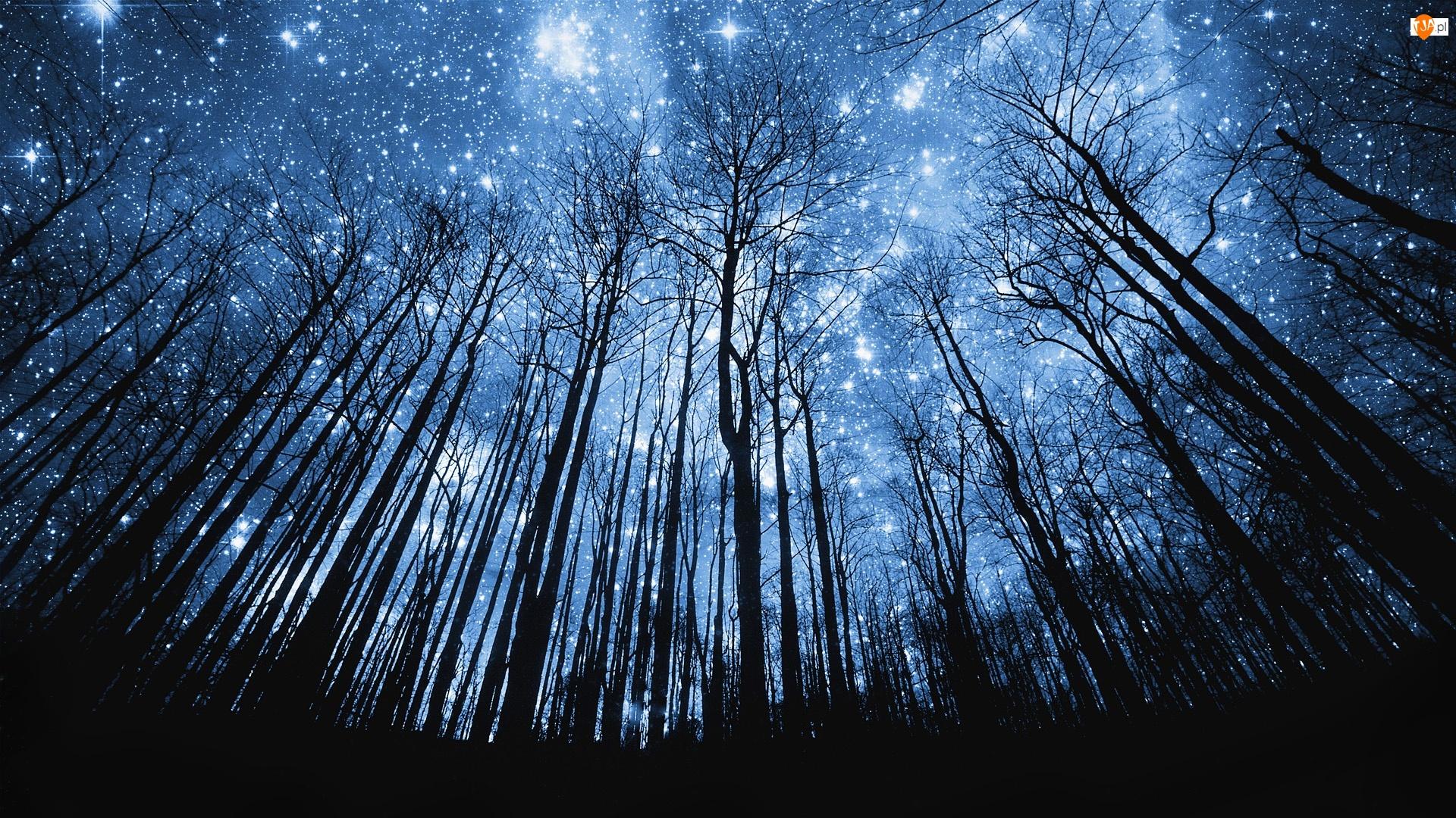 Las, Niebo, Gwiazdy