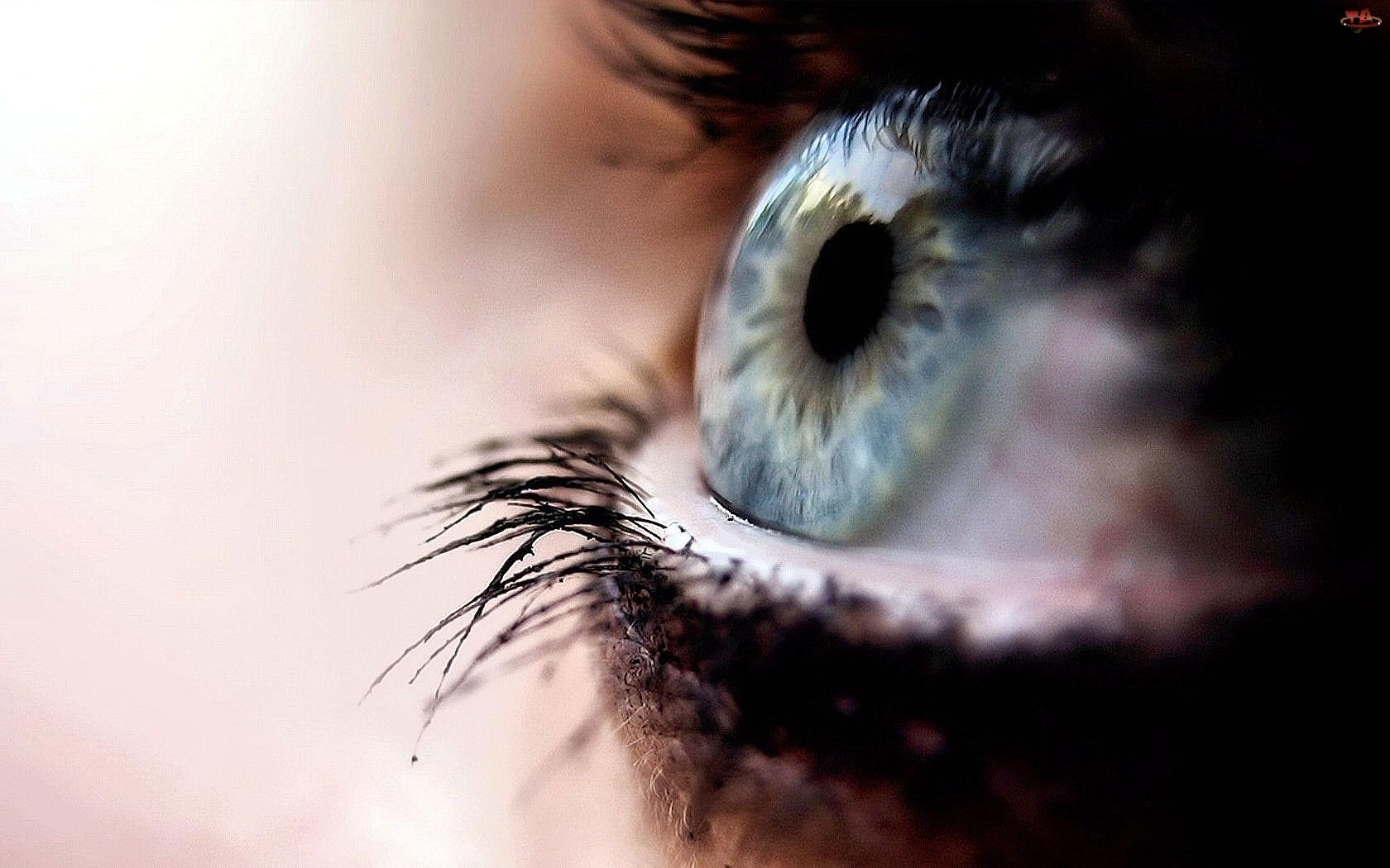 Oko, Rzęsy