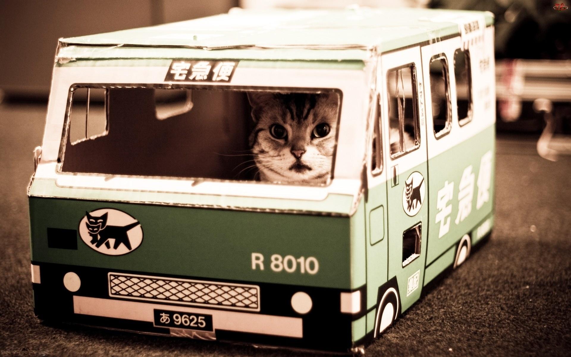 Kot, Autobus