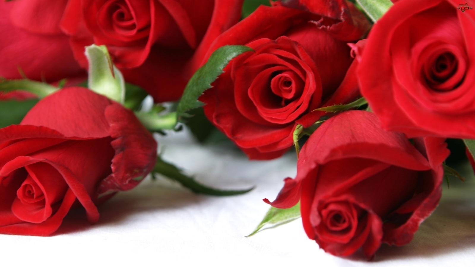 Róż, Bukiet, Czerwonych
