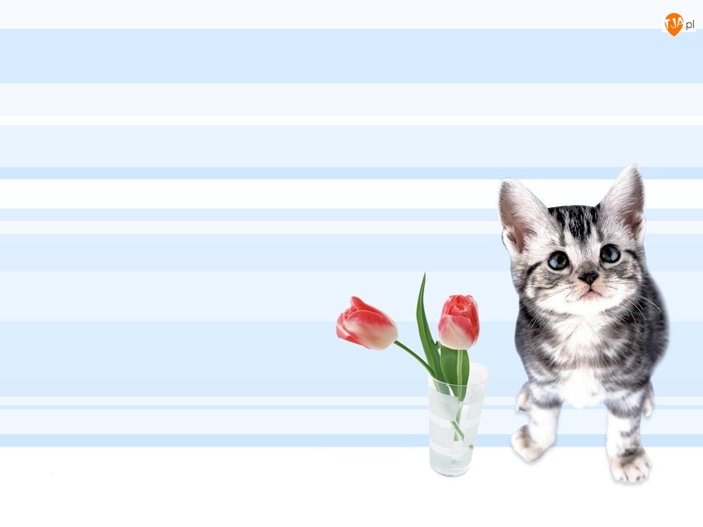Tulipany, Kotek, Dwa