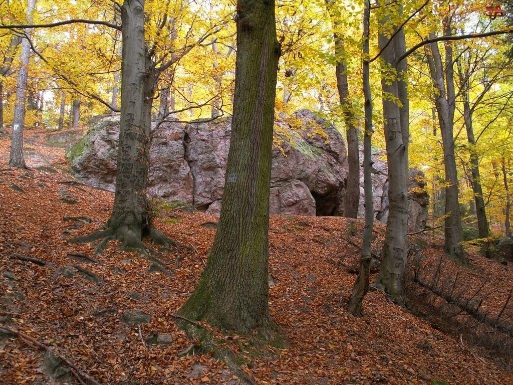 Drzewa, Jaskinia, Głazy, Wejście