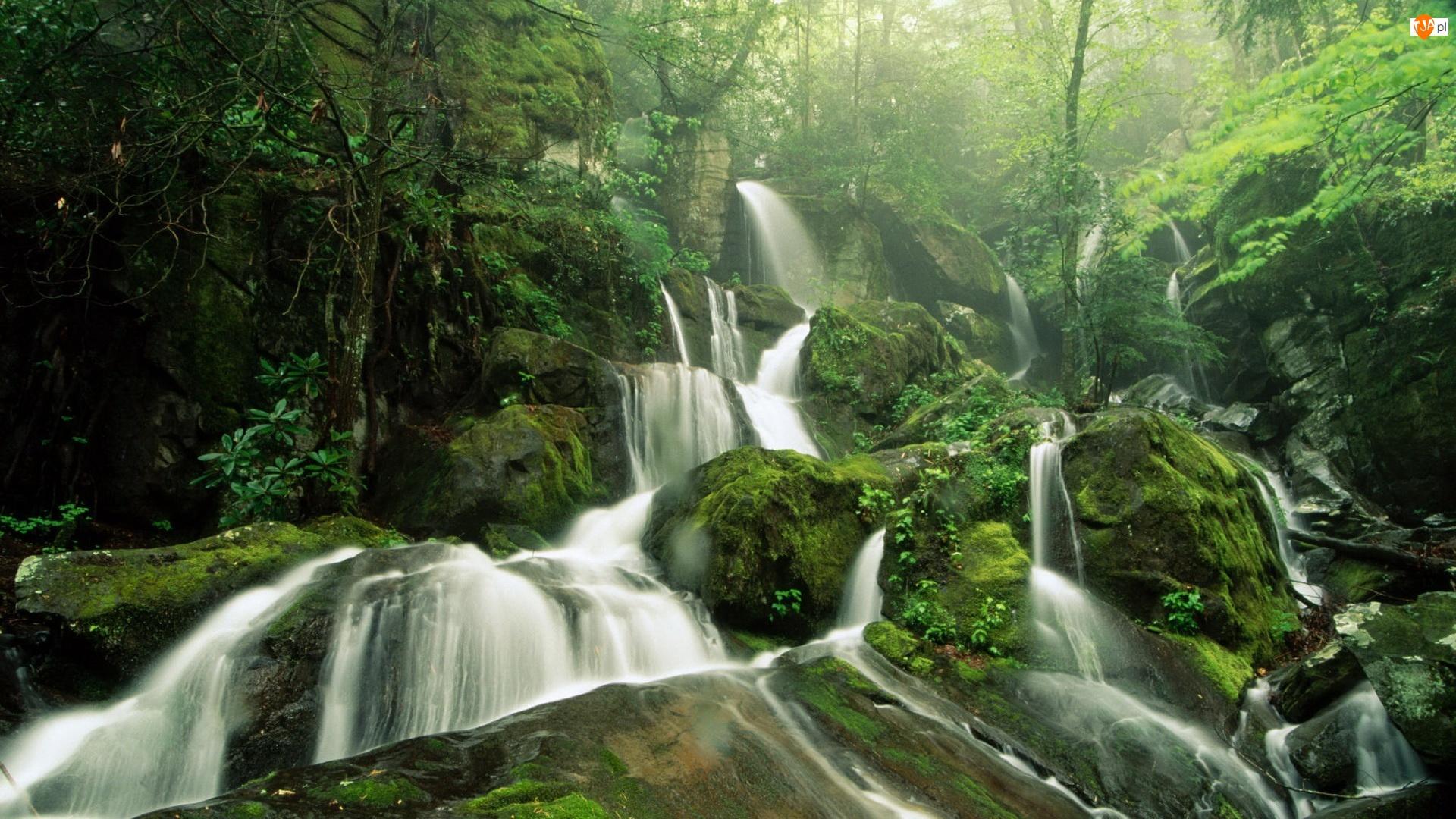 Dżungla, Kamienie, Wodospad, Mech