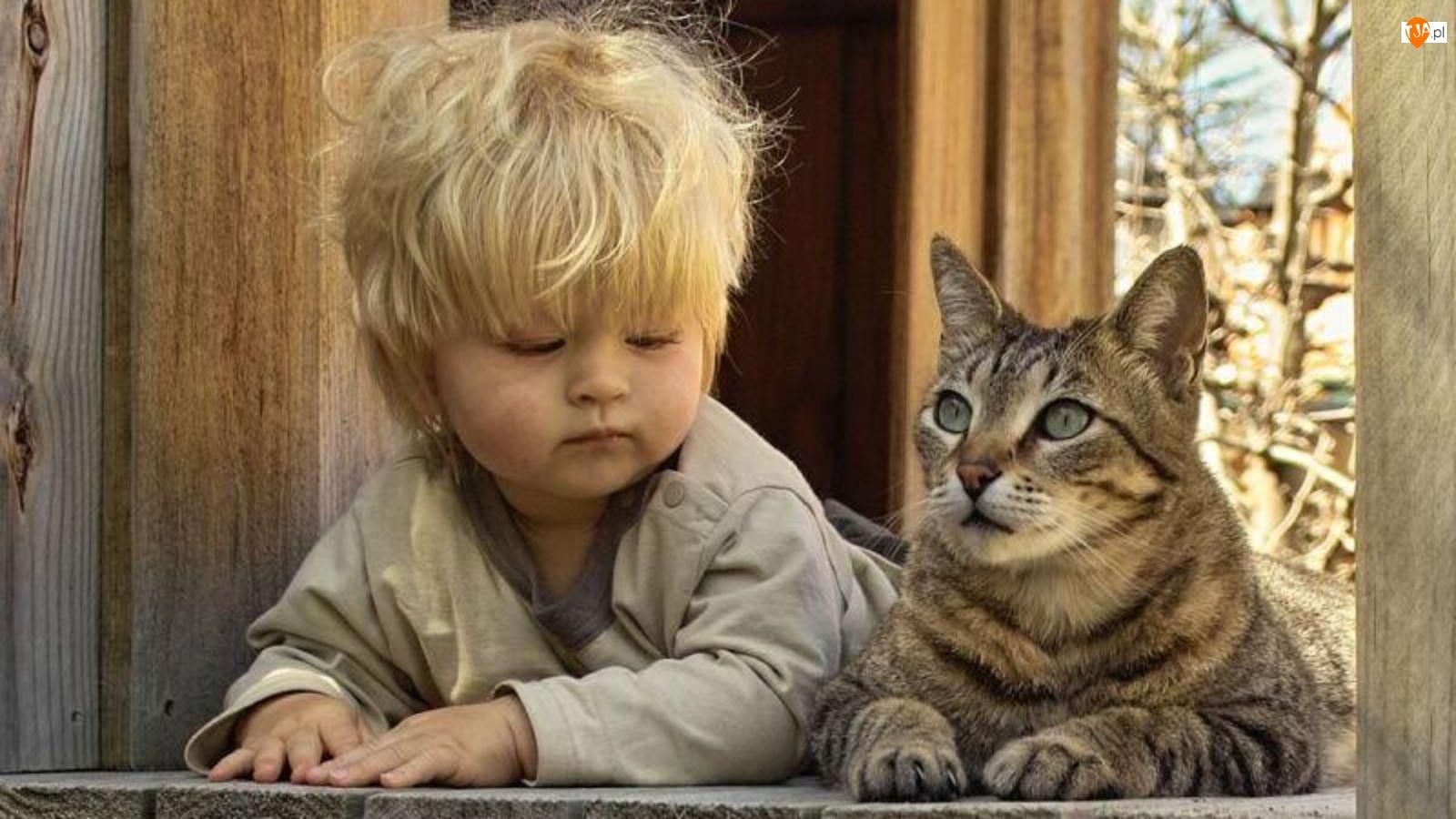 Kot, Dziecko, Okno