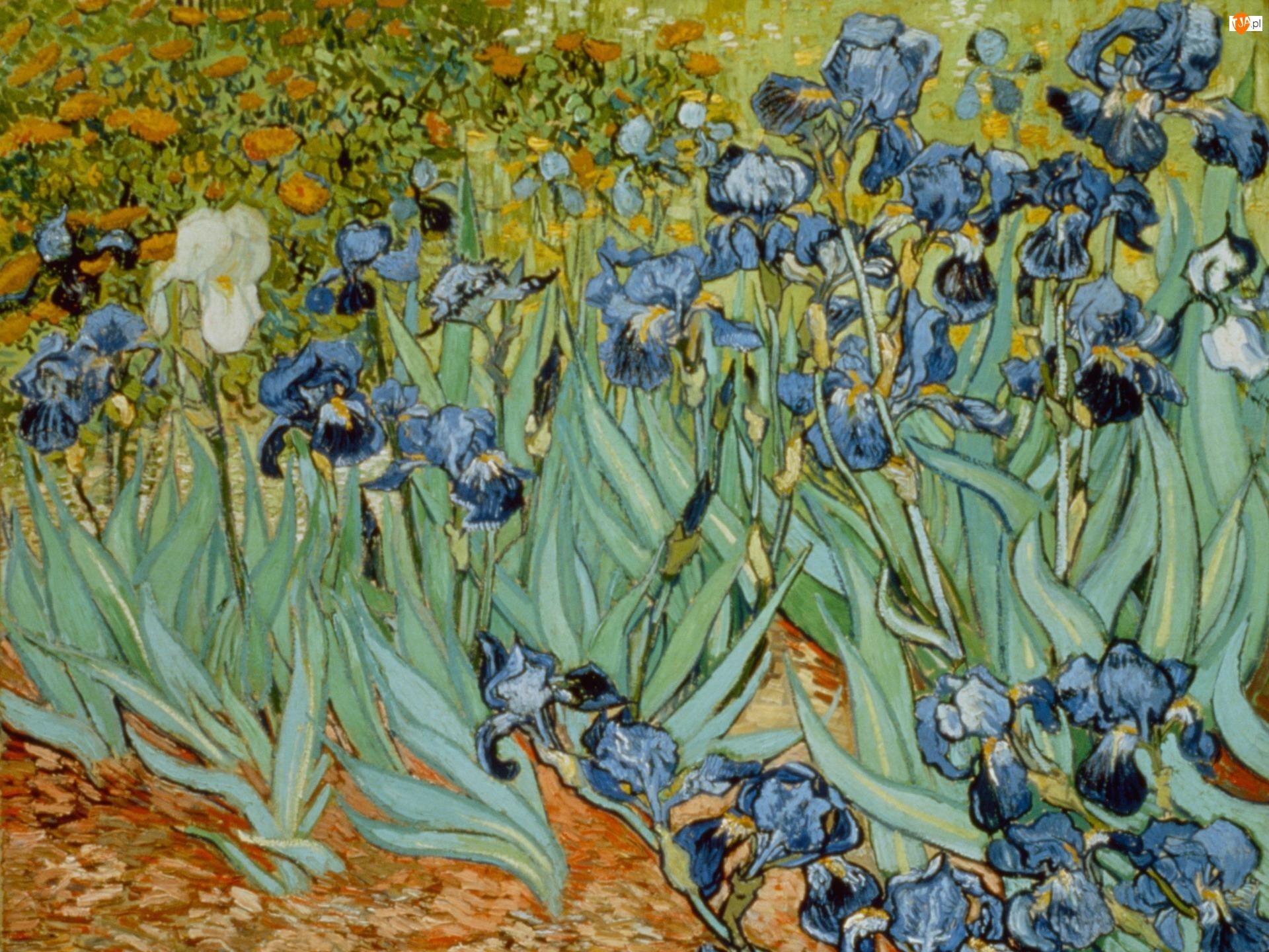 Obraz, Irysy, Vincent van Gogh