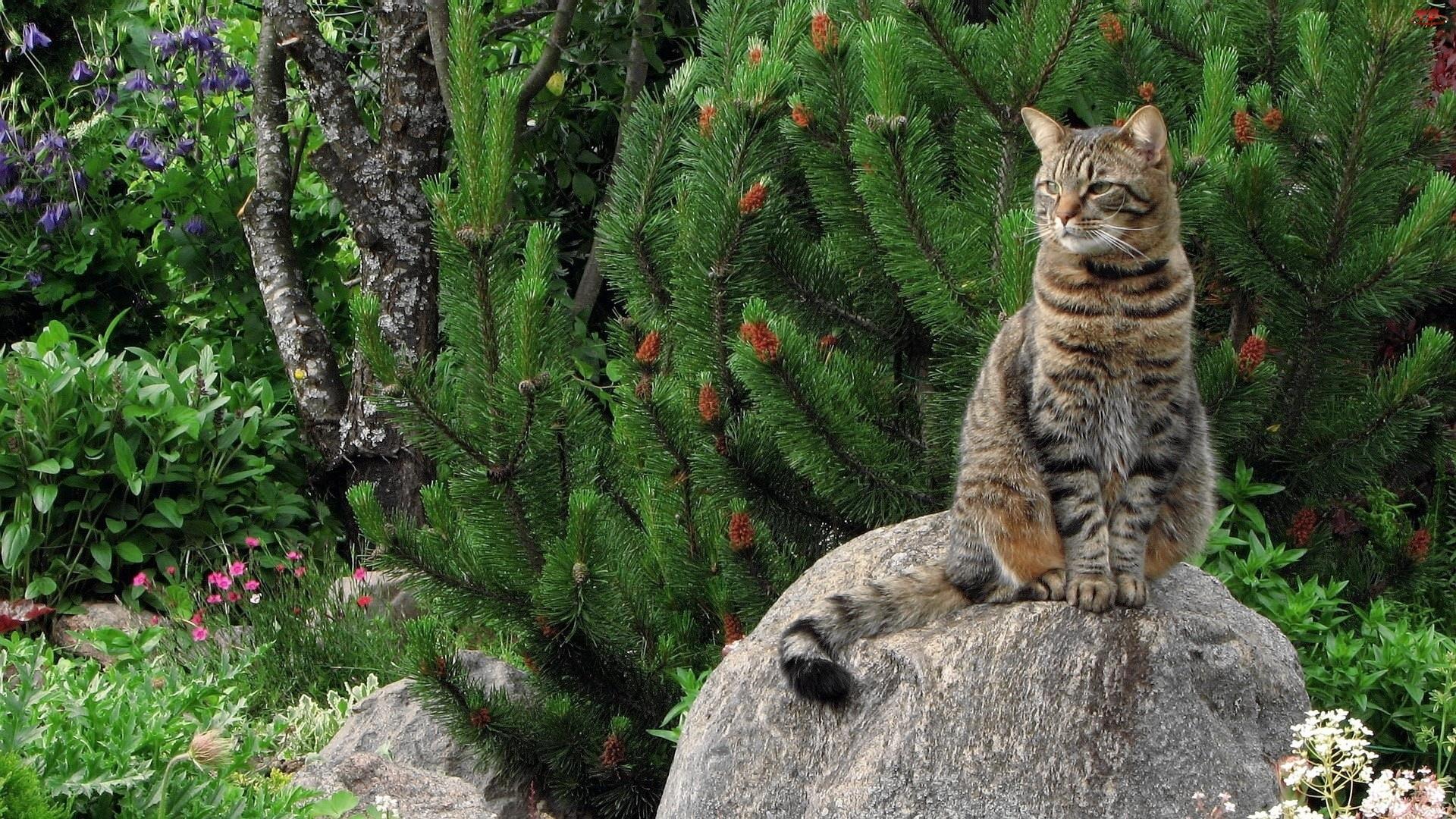 Kot, Iglaki, Kamień, Drzewa