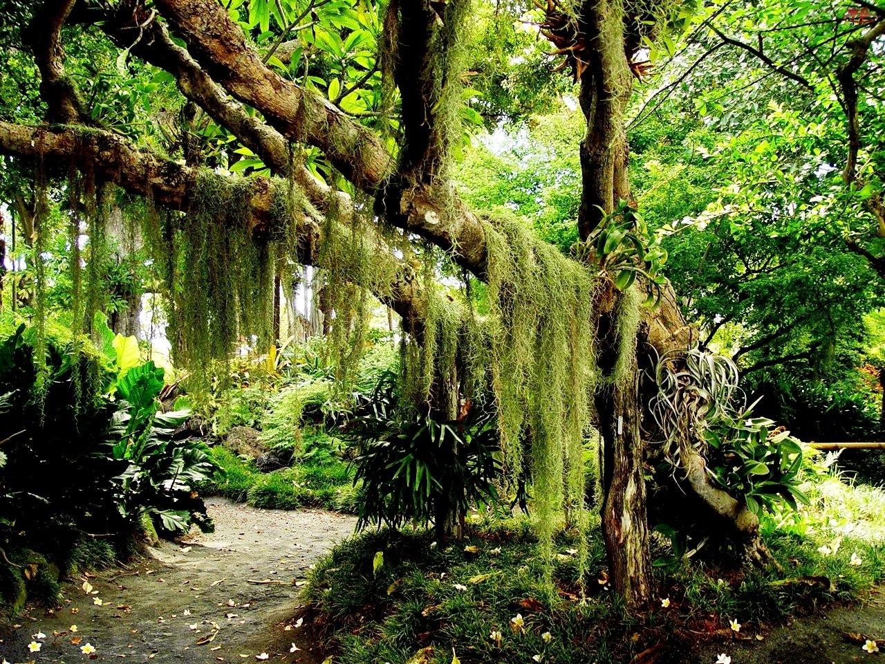 Girlandy, Drzewo, Zielone