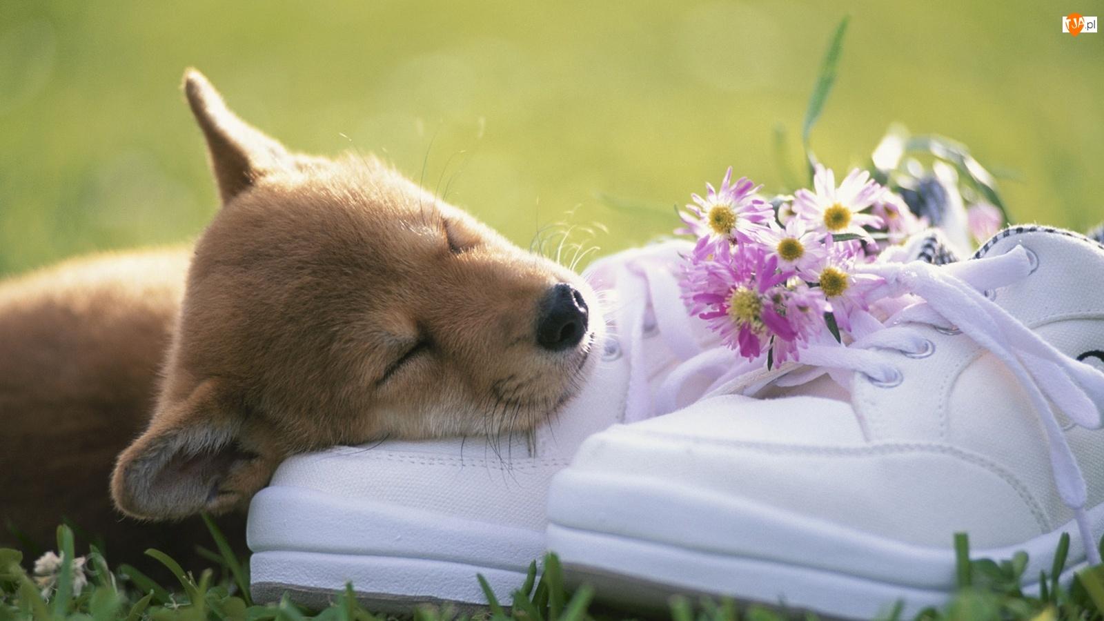 Psiak, Kwiatków, Trampki, Bukiecik