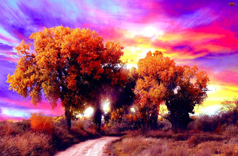 Drzewa, Jesień, Kolorowe, Niebo