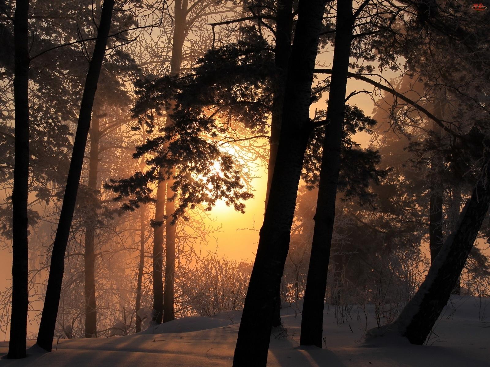 Zachod, Las, Słońca, Zimowy