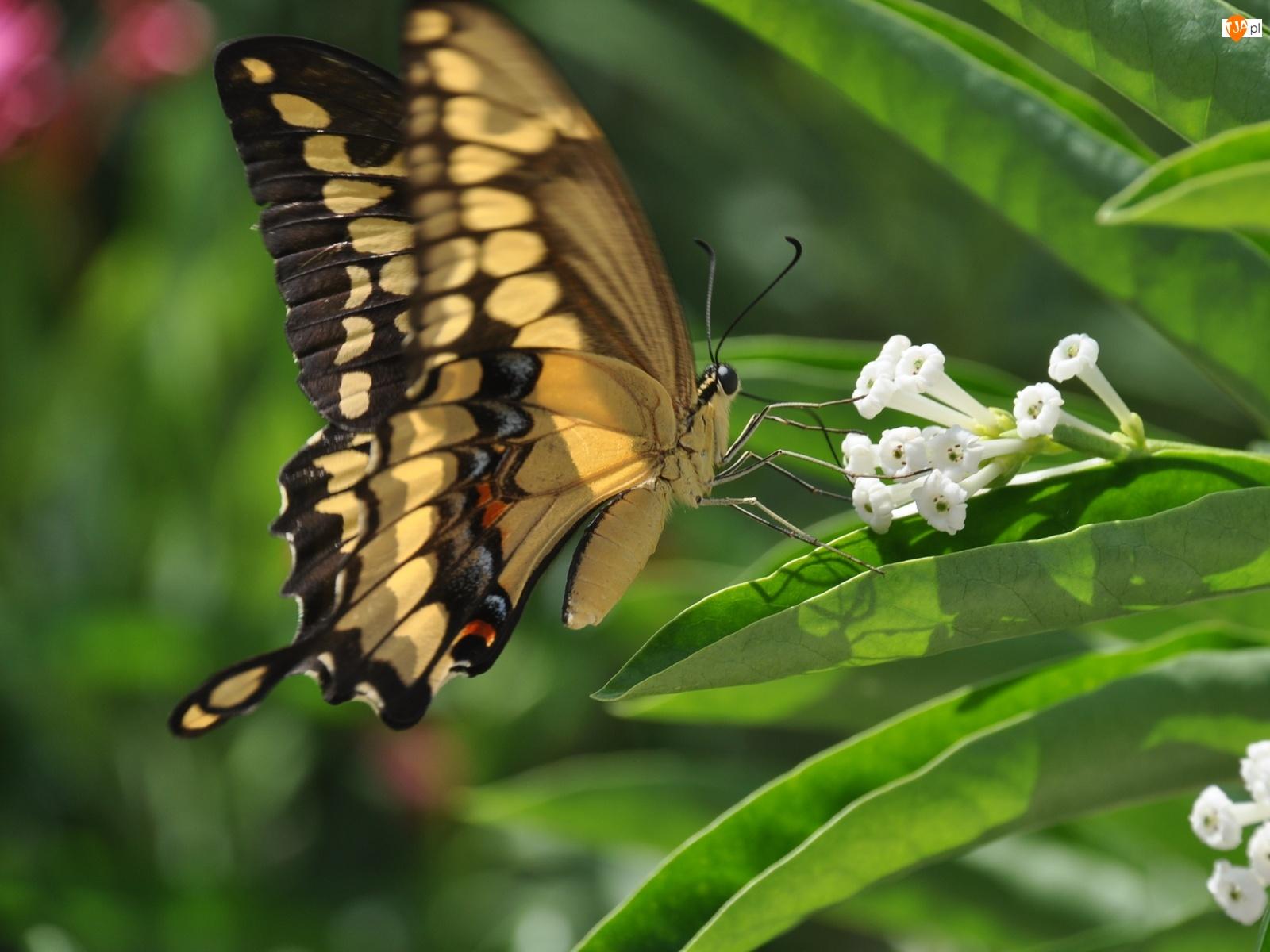 Liście, Kwiat, Motyl
