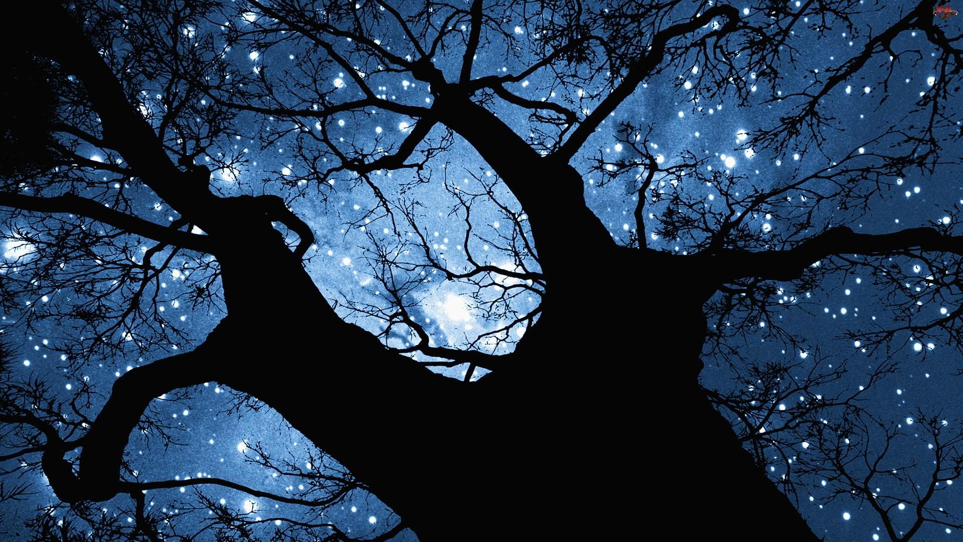 Drzewo, Niebo, Gwiazdy