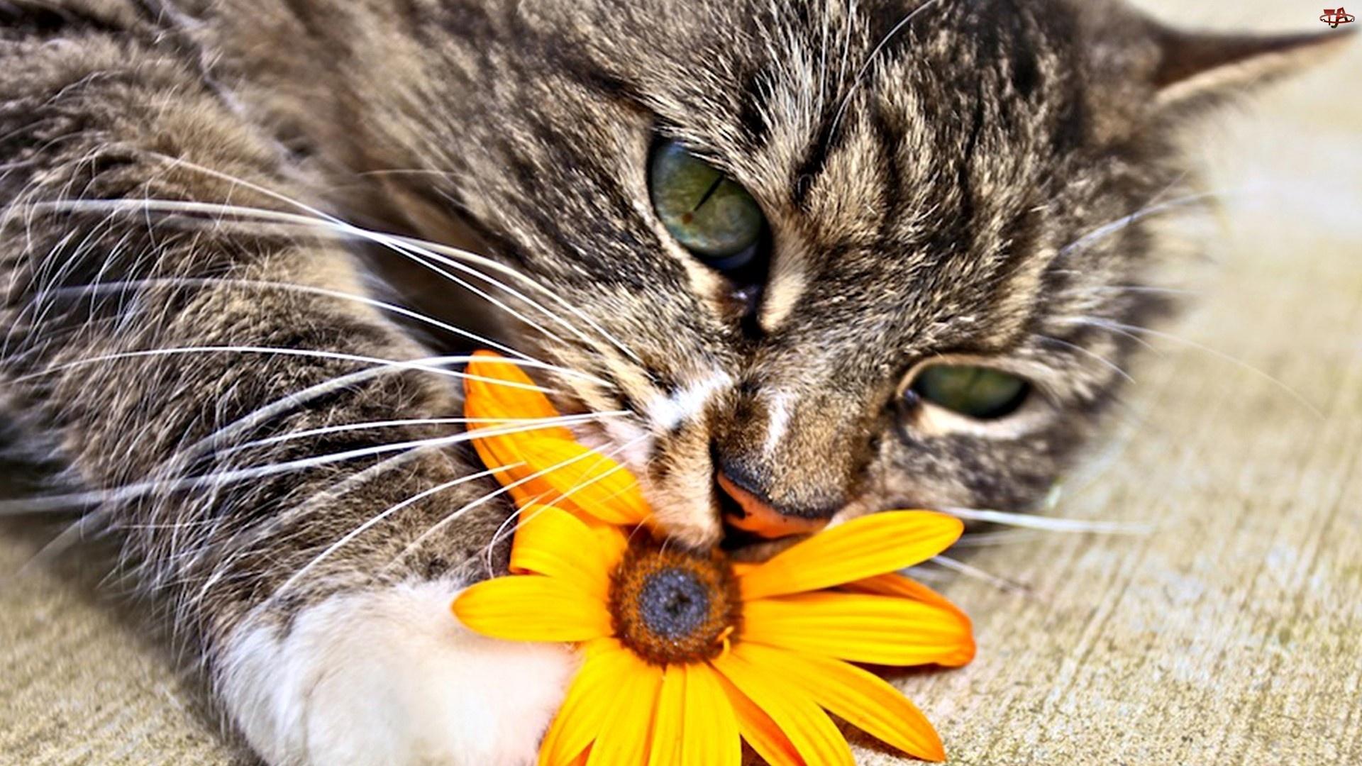 Kotek, Kwiatuszek