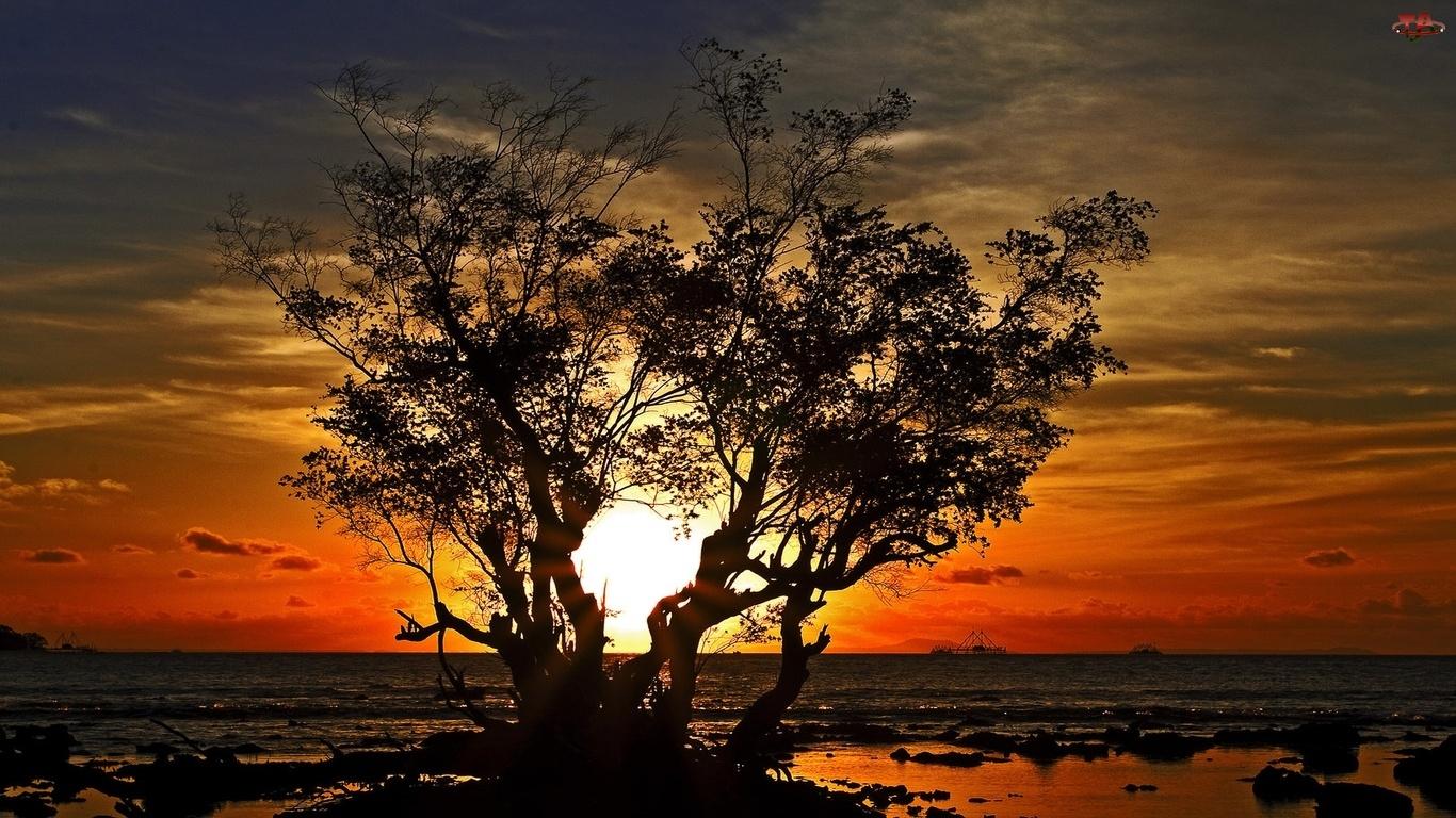 Słońca, Drzewo, Zachód
