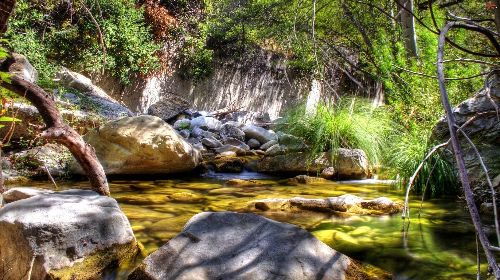 Rzeka, Kamienie, Drzewa