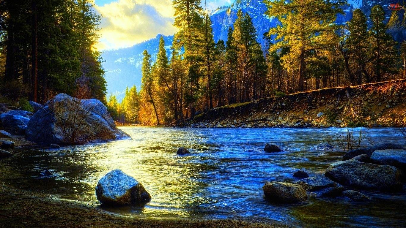 Drzewa, Rzeka