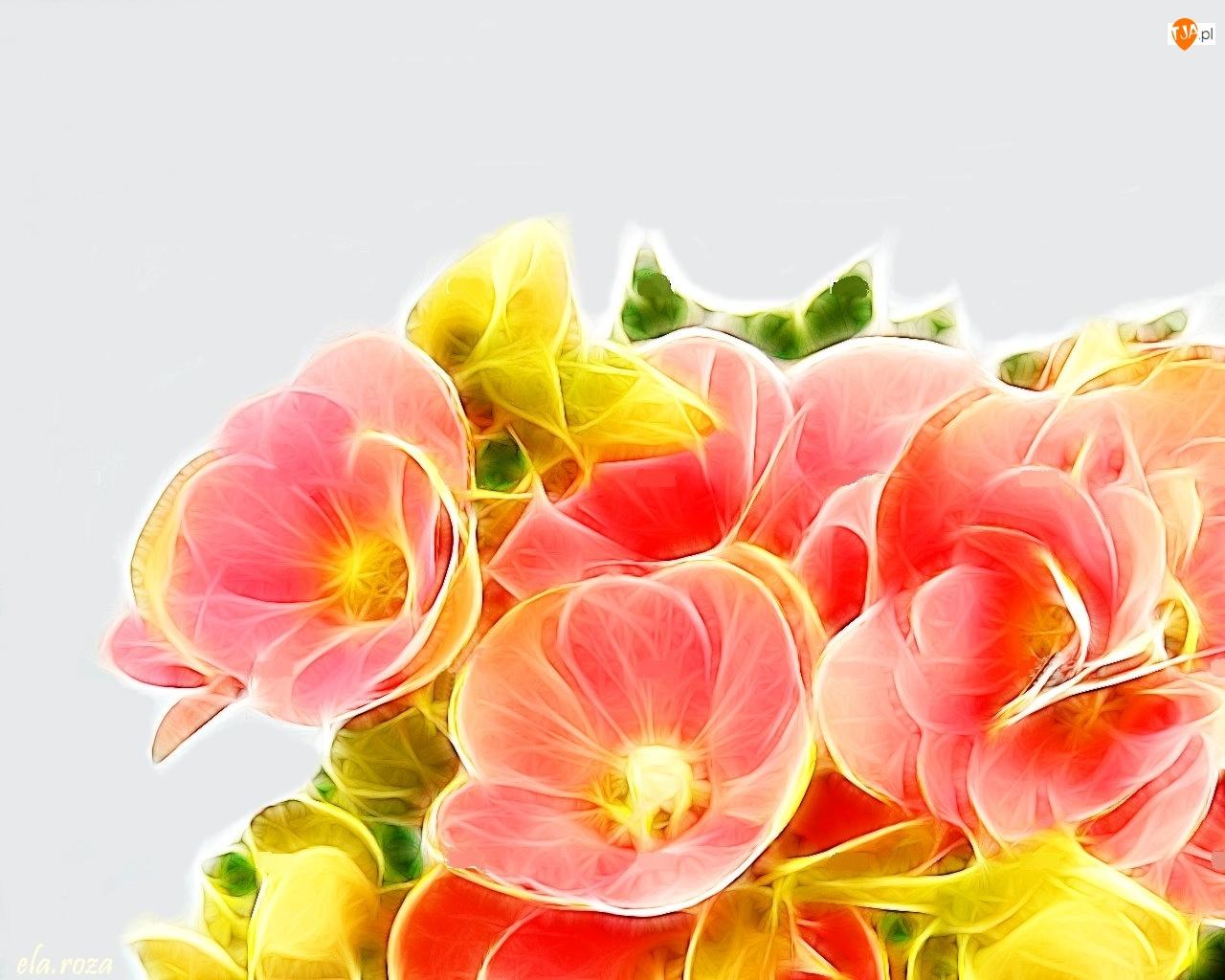 Fractalius, Różowe, Begonie