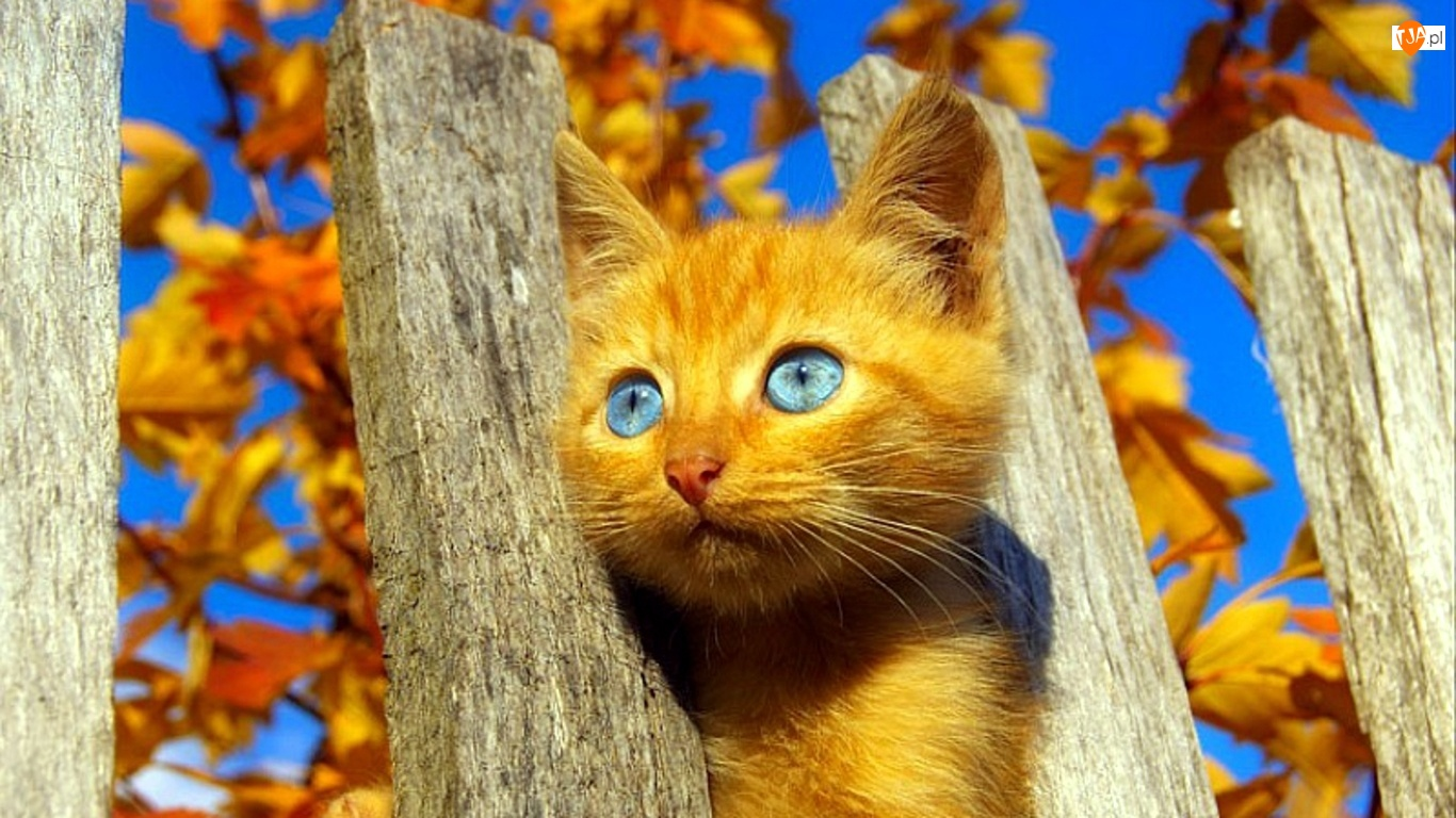 Kot, Płot
