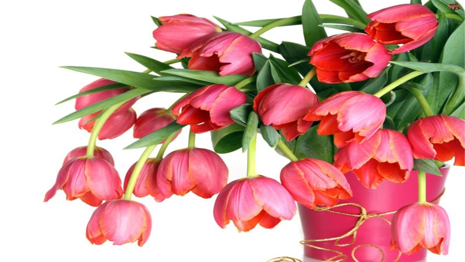 Tulipanów, Wazon, Różowych, Bukiet, Różowy